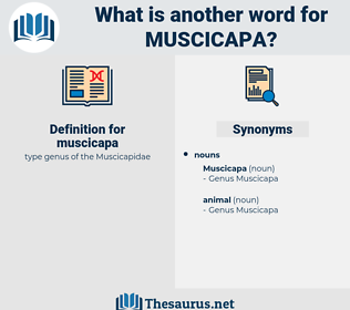 muscicapa, synonym muscicapa, another word for muscicapa, words like muscicapa, thesaurus muscicapa