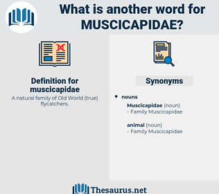muscicapidae, synonym muscicapidae, another word for muscicapidae, words like muscicapidae, thesaurus muscicapidae