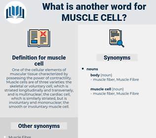 muscle cell, synonym muscle cell, another word for muscle cell, words like muscle cell, thesaurus muscle cell