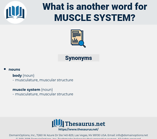 muscle system, synonym muscle system, another word for muscle system, words like muscle system, thesaurus muscle system