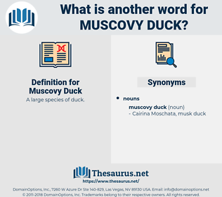 Muscovy Duck, synonym Muscovy Duck, another word for Muscovy Duck, words like Muscovy Duck, thesaurus Muscovy Duck