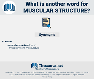 muscular structure, synonym muscular structure, another word for muscular structure, words like muscular structure, thesaurus muscular structure