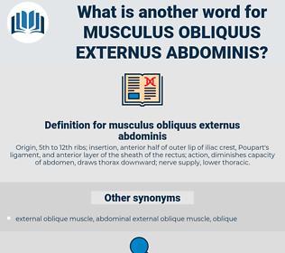 musculus obliquus externus abdominis, synonym musculus obliquus externus abdominis, another word for musculus obliquus externus abdominis, words like musculus obliquus externus abdominis, thesaurus musculus obliquus externus abdominis