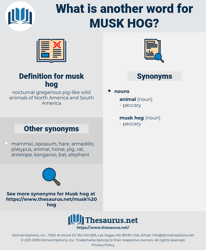 musk hog, synonym musk hog, another word for musk hog, words like musk hog, thesaurus musk hog