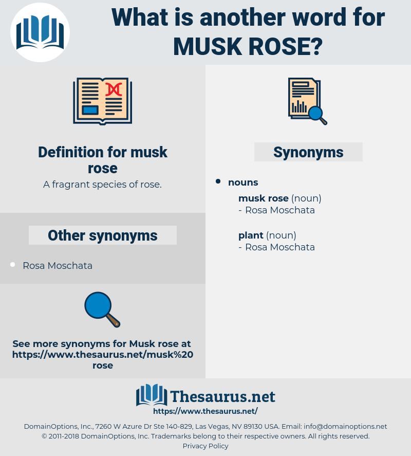 musk rose, synonym musk rose, another word for musk rose, words like musk rose, thesaurus musk rose