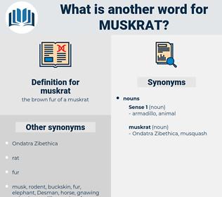 muskrat, synonym muskrat, another word for muskrat, words like muskrat, thesaurus muskrat