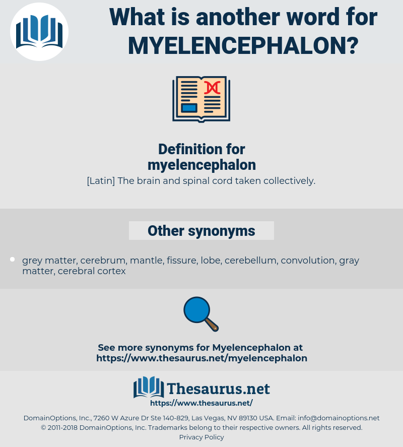 myelencephalon, synonym myelencephalon, another word for myelencephalon, words like myelencephalon, thesaurus myelencephalon