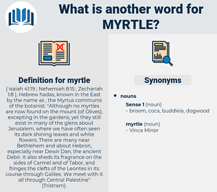 myrtle, synonym myrtle, another word for myrtle, words like myrtle, thesaurus myrtle