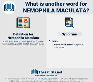 Nemophila Maculata, synonym Nemophila Maculata, another word for Nemophila Maculata, words like Nemophila Maculata, thesaurus Nemophila Maculata
