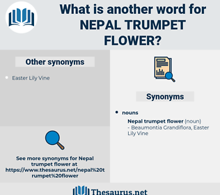 Nepal Trumpet Flower, synonym Nepal Trumpet Flower, another word for Nepal Trumpet Flower, words like Nepal Trumpet Flower, thesaurus Nepal Trumpet Flower
