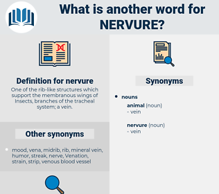 nervure, synonym nervure, another word for nervure, words like nervure, thesaurus nervure