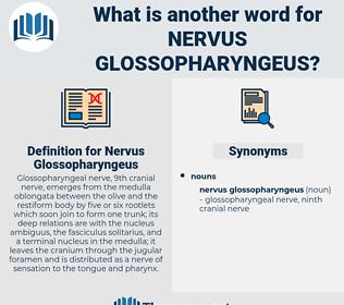 Nervus Glossopharyngeus, synonym Nervus Glossopharyngeus, another word for Nervus Glossopharyngeus, words like Nervus Glossopharyngeus, thesaurus Nervus Glossopharyngeus