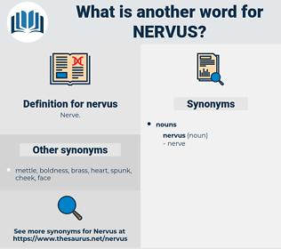 nervus, synonym nervus, another word for nervus, words like nervus, thesaurus nervus