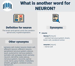 neuron, synonym neuron, another word for neuron, words like neuron, thesaurus neuron