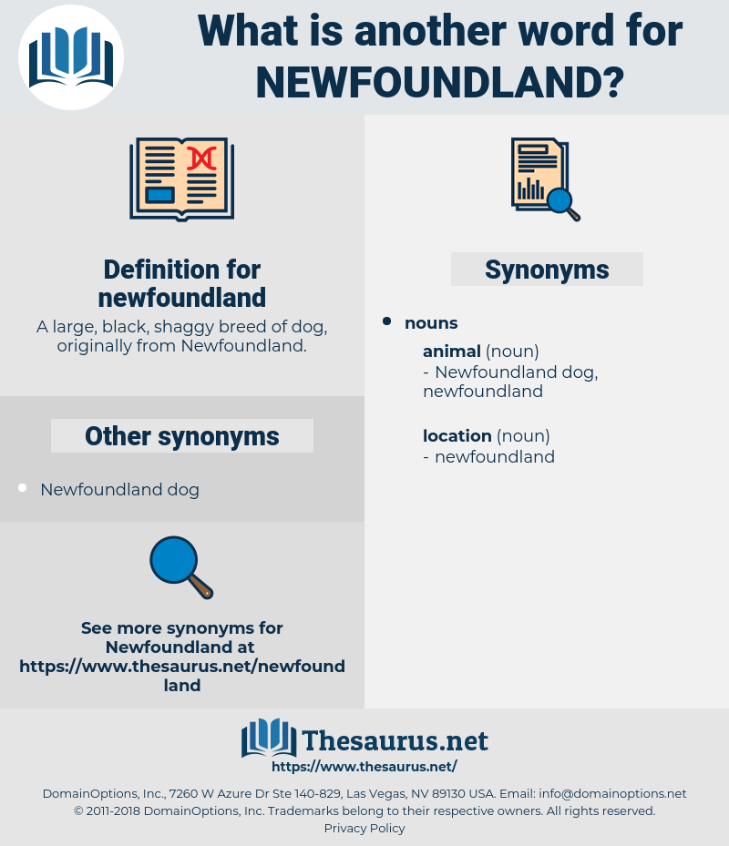 newfoundland, synonym newfoundland, another word for newfoundland, words like newfoundland, thesaurus newfoundland