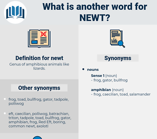 newt, synonym newt, another word for newt, words like newt, thesaurus newt