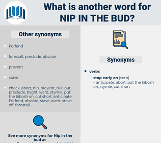 nip in the bud, synonym nip in the bud, another word for nip in the bud, words like nip in the bud, thesaurus nip in the bud
