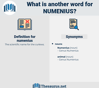 numenius, synonym numenius, another word for numenius, words like numenius, thesaurus numenius