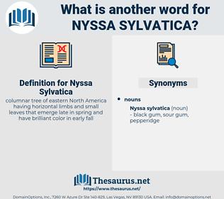 Nyssa Sylvatica, synonym Nyssa Sylvatica, another word for Nyssa Sylvatica, words like Nyssa Sylvatica, thesaurus Nyssa Sylvatica