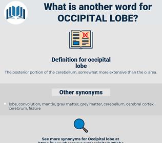 occipital lobe, synonym occipital lobe, another word for occipital lobe, words like occipital lobe, thesaurus occipital lobe