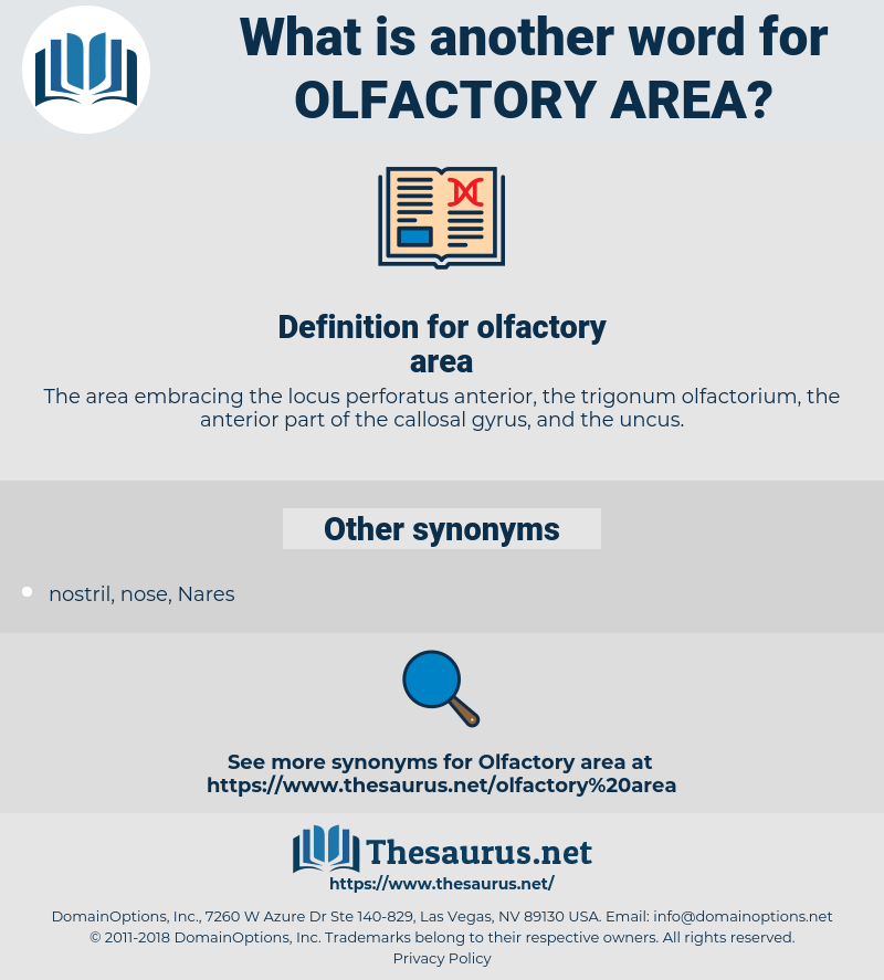 olfactory area, synonym olfactory area, another word for olfactory area, words like olfactory area, thesaurus olfactory area