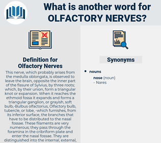 Olfactory Nerves, synonym Olfactory Nerves, another word for Olfactory Nerves, words like Olfactory Nerves, thesaurus Olfactory Nerves