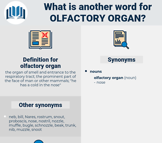 olfactory organ, synonym olfactory organ, another word for olfactory organ, words like olfactory organ, thesaurus olfactory organ
