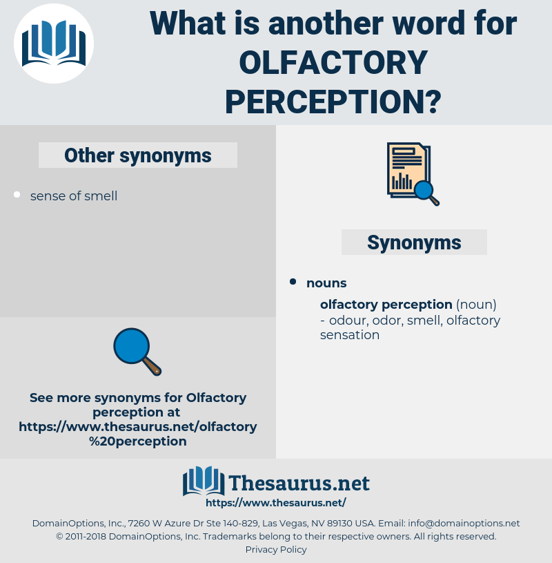 olfactory perception, synonym olfactory perception, another word for olfactory perception, words like olfactory perception, thesaurus olfactory perception