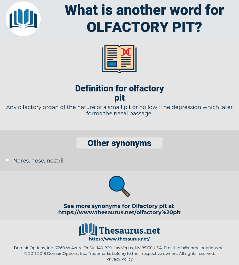 olfactory pit, synonym olfactory pit, another word for olfactory pit, words like olfactory pit, thesaurus olfactory pit