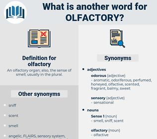 olfactory, synonym olfactory, another word for olfactory, words like olfactory, thesaurus olfactory