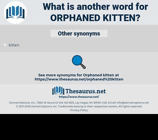 orphaned kitten, synonym orphaned kitten, another word for orphaned kitten, words like orphaned kitten, thesaurus orphaned kitten