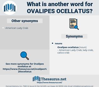Ovalipes ocellatus, synonym Ovalipes ocellatus, another word for Ovalipes ocellatus, words like Ovalipes ocellatus, thesaurus Ovalipes ocellatus