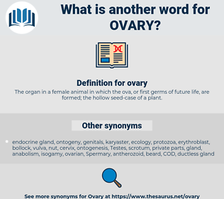 ovary, synonym ovary, another word for ovary, words like ovary, thesaurus ovary