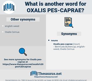 Oxalis Pes-caprae, synonym Oxalis Pes-caprae, another word for Oxalis Pes-caprae, words like Oxalis Pes-caprae, thesaurus Oxalis Pes-caprae