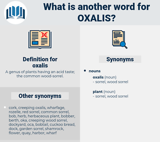 oxalis, synonym oxalis, another word for oxalis, words like oxalis, thesaurus oxalis