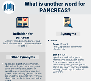 pancreas, synonym pancreas, another word for pancreas, words like pancreas, thesaurus pancreas