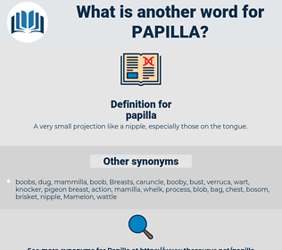 papilla, synonym papilla, another word for papilla, words like papilla, thesaurus papilla