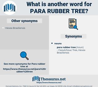 Para Rubber Tree, synonym Para Rubber Tree, another word for Para Rubber Tree, words like Para Rubber Tree, thesaurus Para Rubber Tree