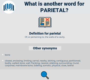 parietal, synonym parietal, another word for parietal, words like parietal, thesaurus parietal