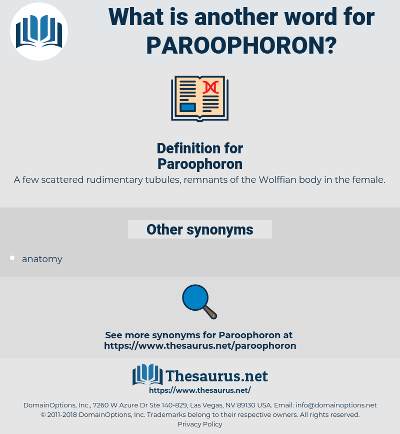 Paroophoron, synonym Paroophoron, another word for Paroophoron, words like Paroophoron, thesaurus Paroophoron