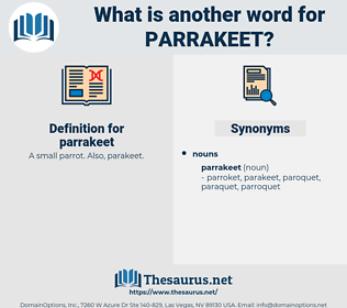 parrakeet, synonym parrakeet, another word for parrakeet, words like parrakeet, thesaurus parrakeet