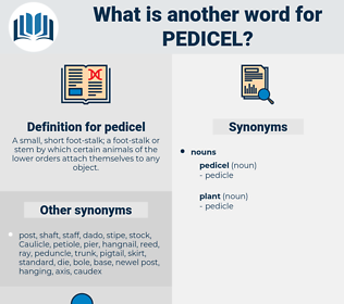 pedicel, synonym pedicel, another word for pedicel, words like pedicel, thesaurus pedicel