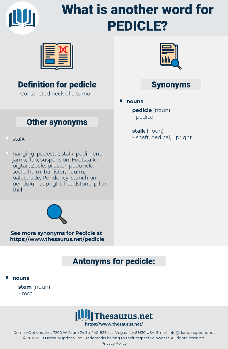 pedicle, synonym pedicle, another word for pedicle, words like pedicle, thesaurus pedicle