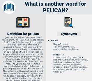 pelican, synonym pelican, another word for pelican, words like pelican, thesaurus pelican