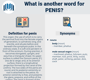 penis, synonym penis, another word for penis, words like penis, thesaurus penis