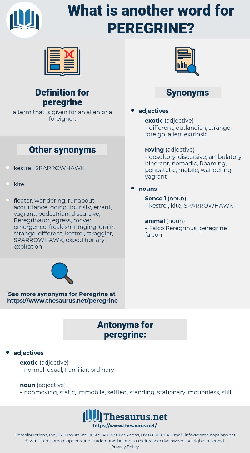 peregrine, synonym peregrine, another word for peregrine, words like peregrine, thesaurus peregrine