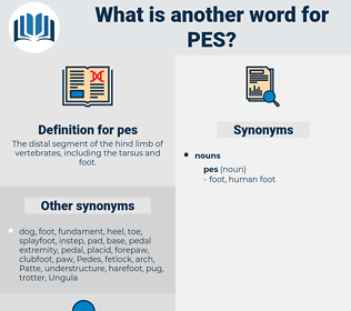 pes, synonym pes, another word for pes, words like pes, thesaurus pes