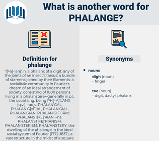 phalange, synonym phalange, another word for phalange, words like phalange, thesaurus phalange