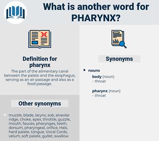 pharynx, synonym pharynx, another word for pharynx, words like pharynx, thesaurus pharynx