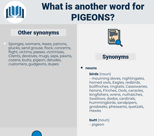 pigeons, synonym pigeons, another word for pigeons, words like pigeons, thesaurus pigeons
